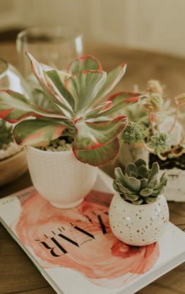 Weekend Project: DIY Succulent Terrarium & Pots