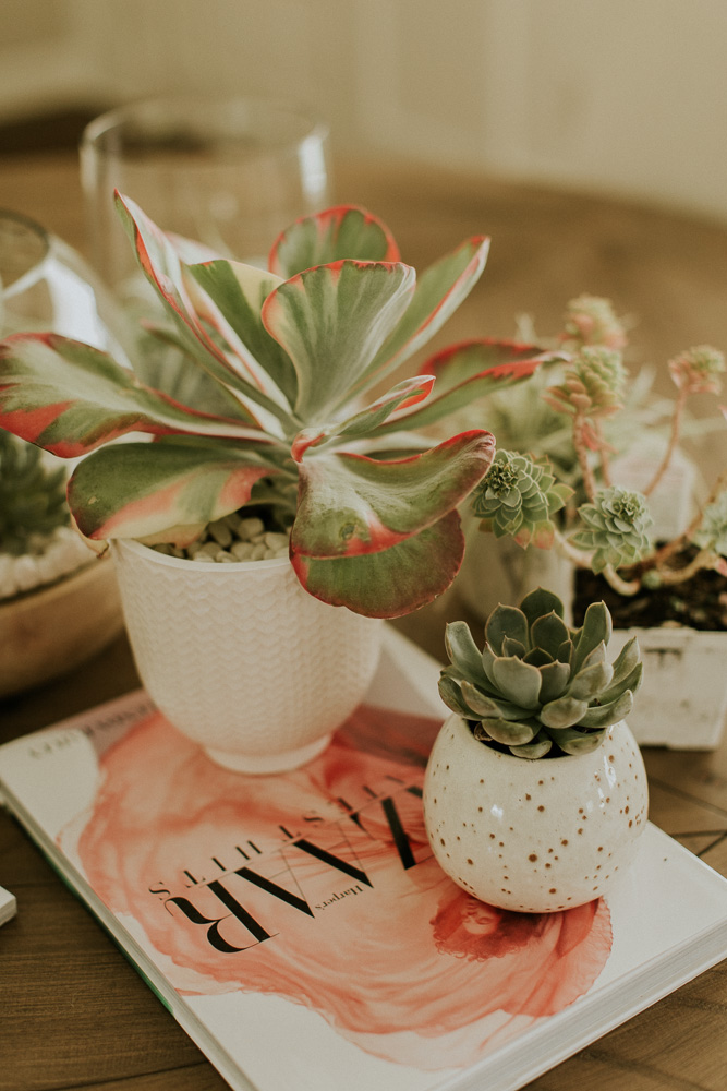 Weekend Project Diy Succulent Terrarium Pots Cella Jane