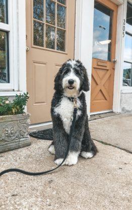 Wren's Puppy Must-Haves